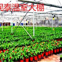 民泰品质几字钢骨架蔬菜大棚值得可信赖企业