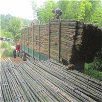 厂家批发果树支撑竹杆