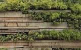 隔断 | 这样的绿植绿色, 家居必备啊-入户花园隔断效果图