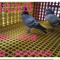 肉鸽养殖格栅@武昌肉鸽养殖格栅@肉鸽养殖格栅生产厂家