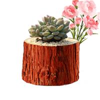 原木花盆树根树桩多肉植物盆栽器带树皮花盆